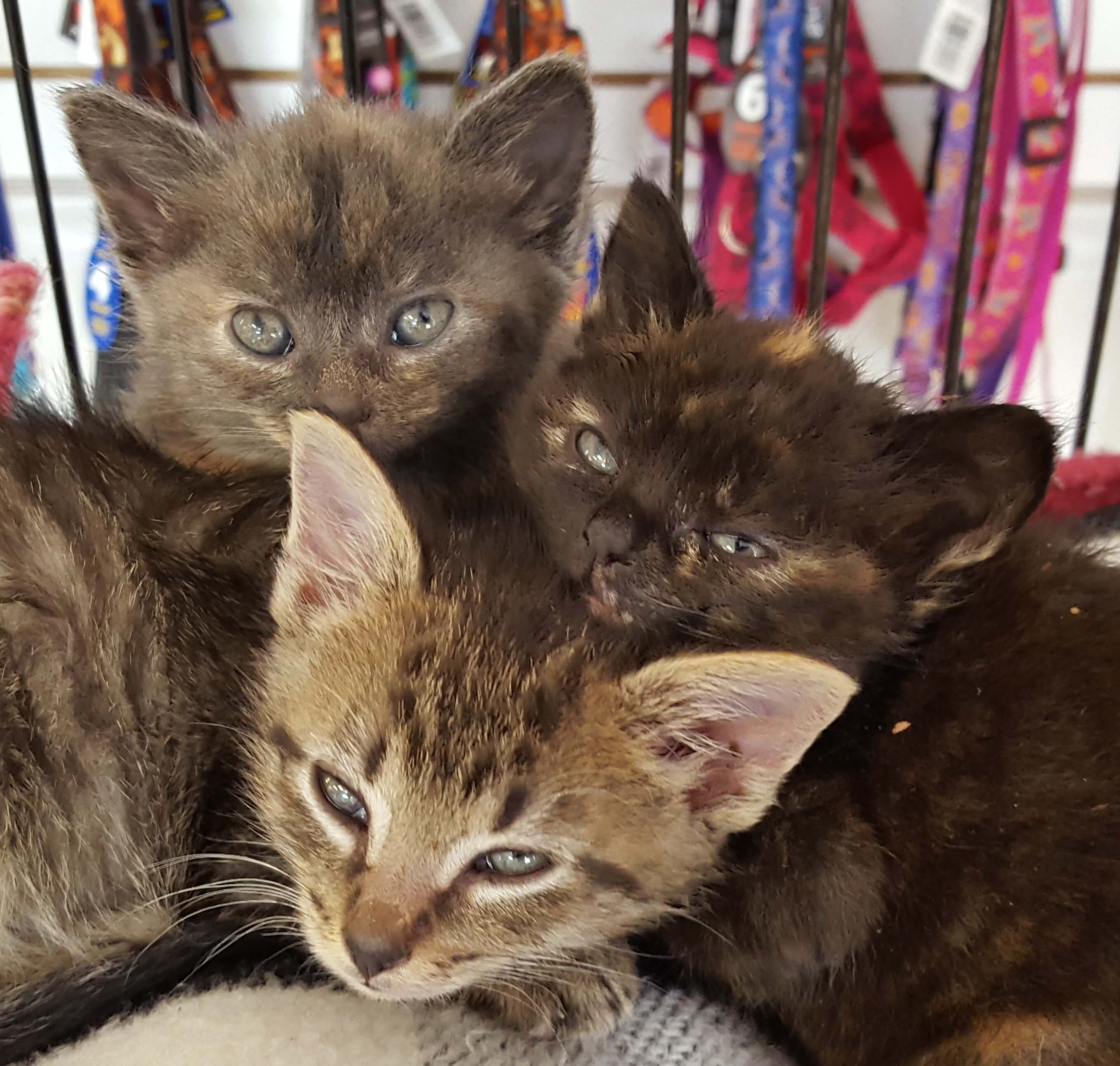 Kittens that need a home