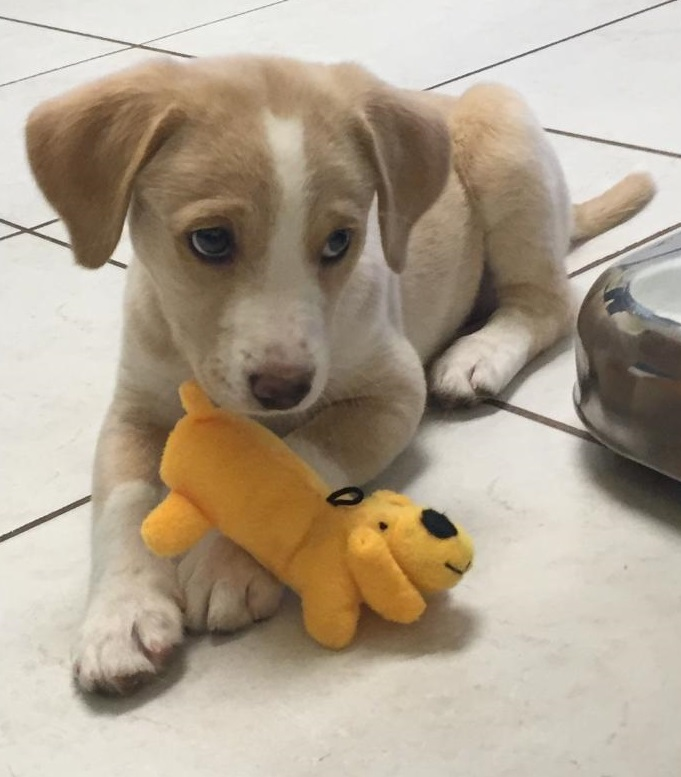 Puppy and new toy